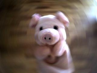 Piggy_1